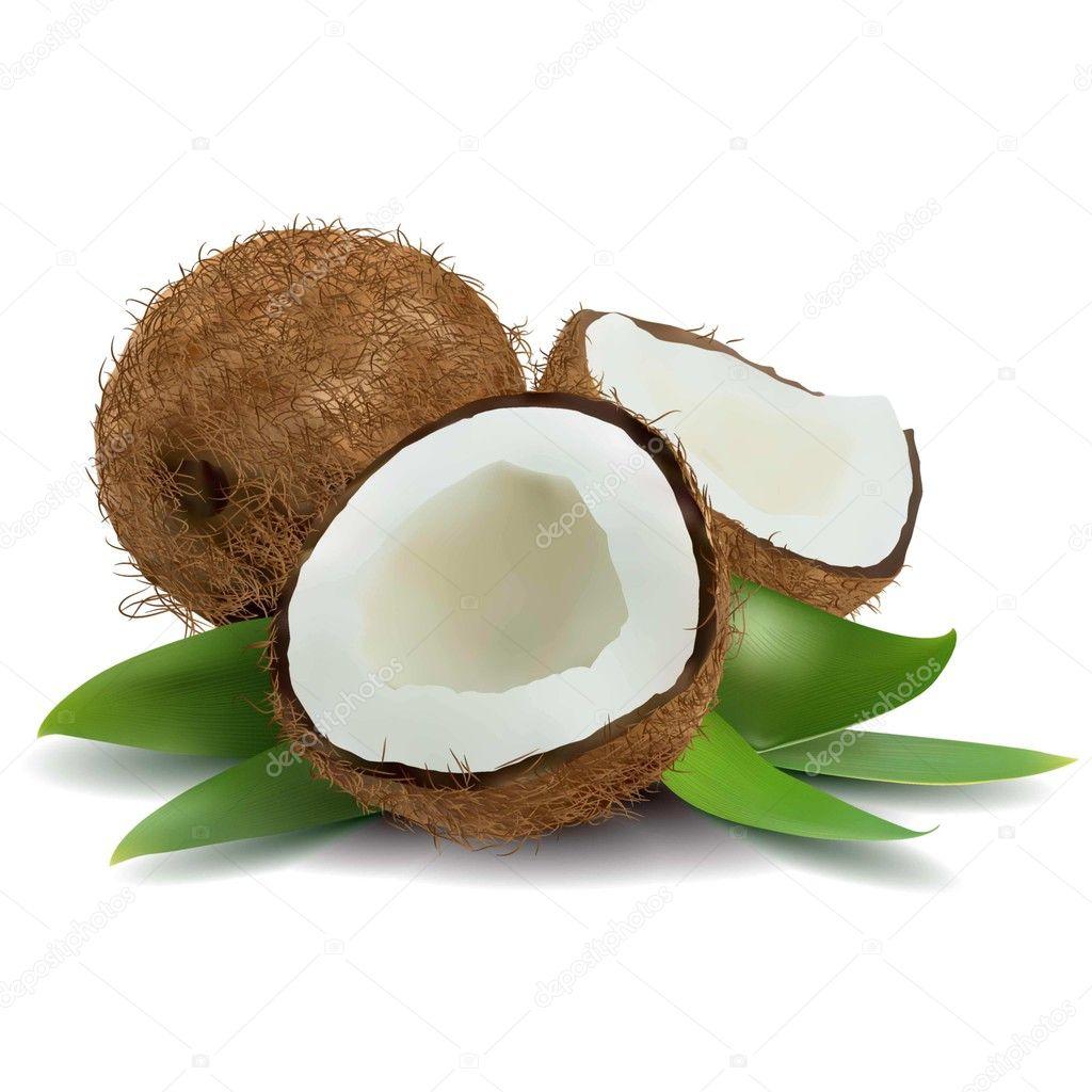 Coco vector de stock anonedsgn 45148387 - Dessin noix de coco ...