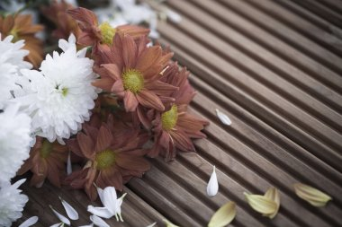 Wilted dying flowers with fallen petals