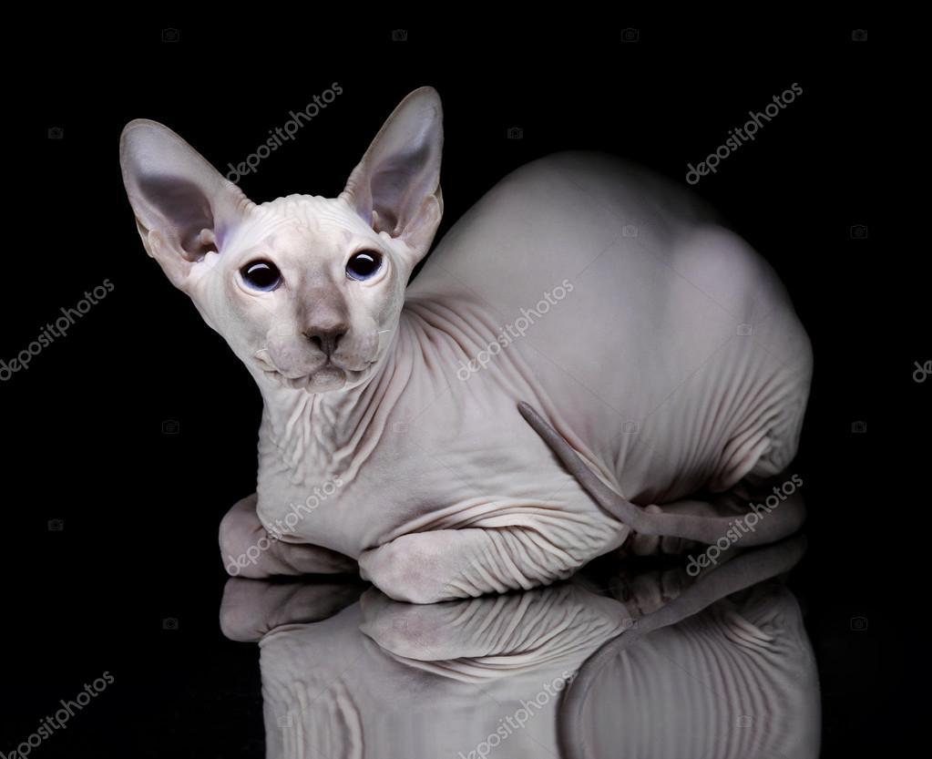 μεγάλο μαύρο pussi σέξι nudegirls