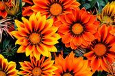 Flowers from Transylvania
