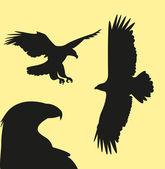 Fotografia illustrazione di falco