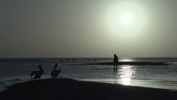 lidé a pelikánů na pláži