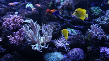 Colourful underwater world