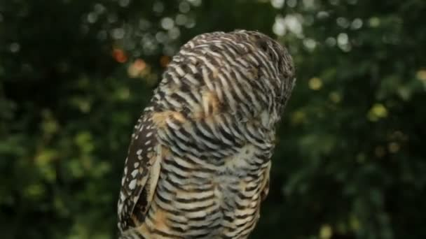 Owl turning its head towards camera