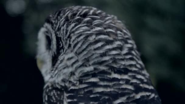čelní close-up sova v noci