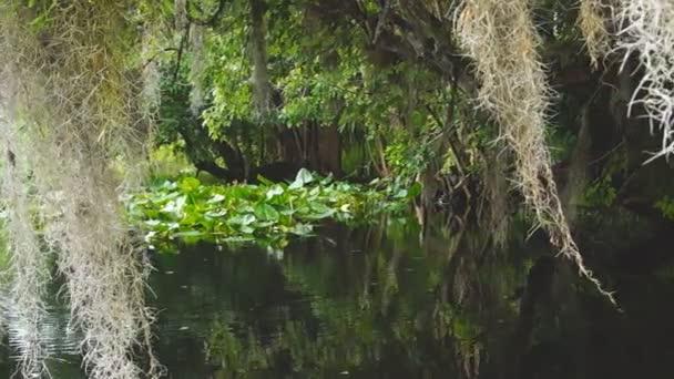 Florida River Swamp