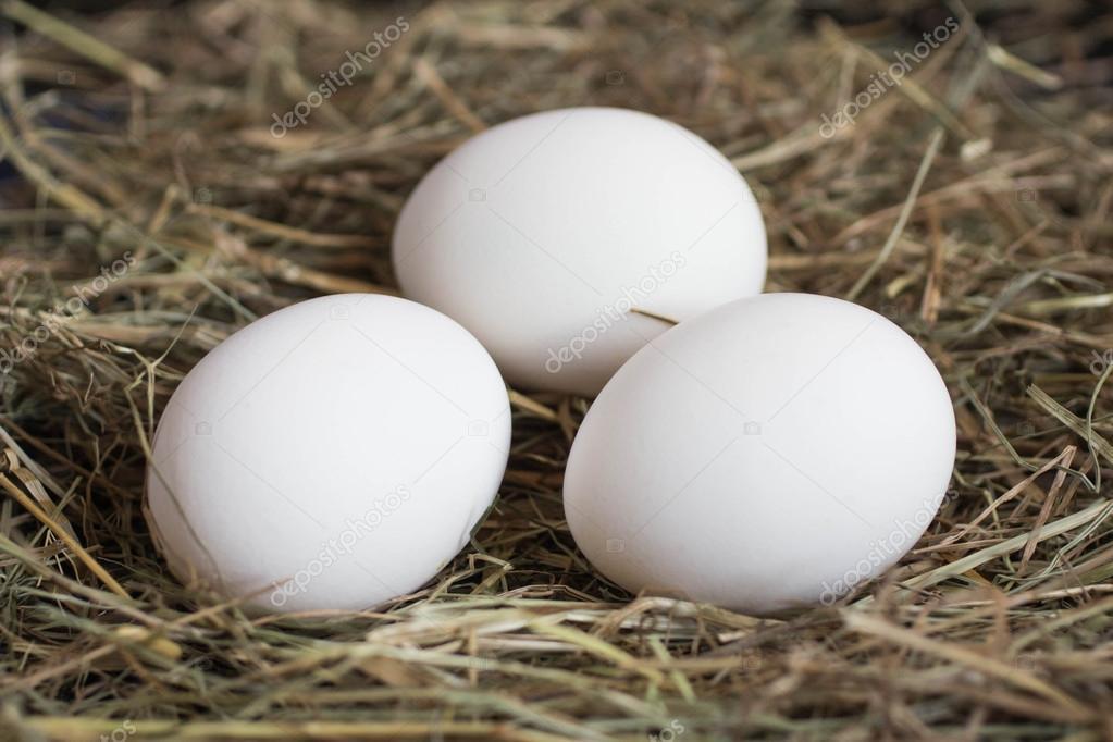 Weiße Vogeleier