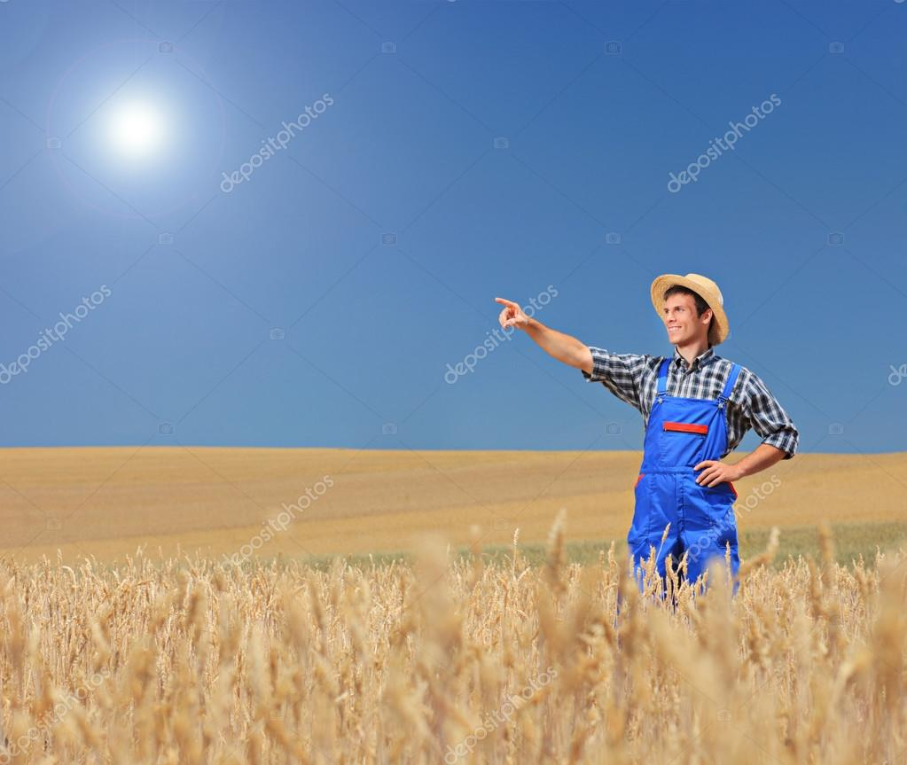 Farmer pointing in wheat field