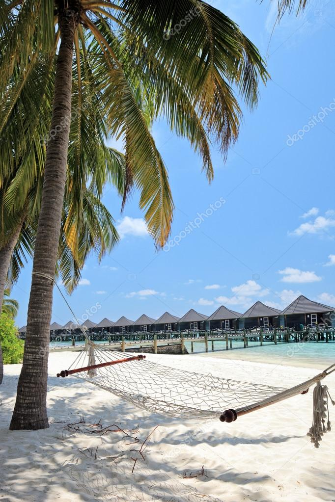 Maldives island palm beach