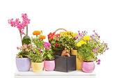 különböző típusú virágok