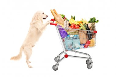 Funny retriever dog pushing a shopping cart full of food products, isolated on white background stock vector