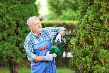 Man trimming tree in garden
