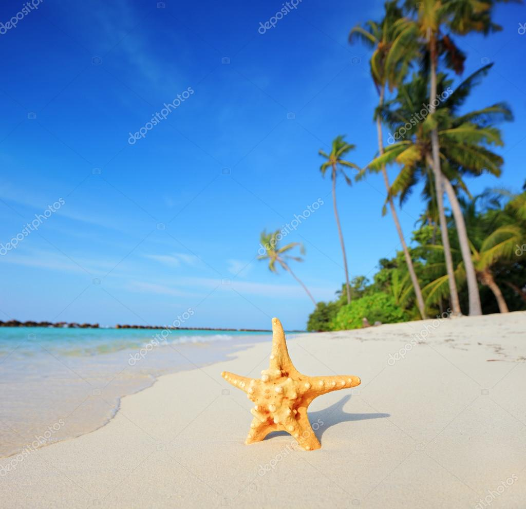 Starfish on beach and turquoise sea