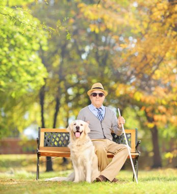 Senior blind on bench with dog