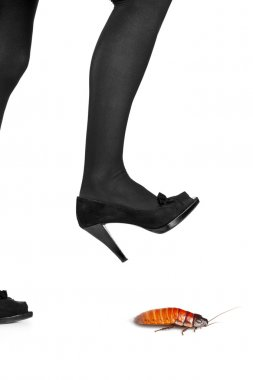 Woman shoe about to step on cockroach