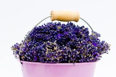 Lavender flower in purple bucket