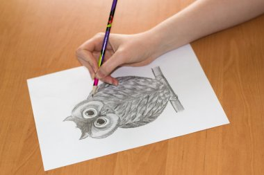 drawing of the owl on a sheet of paper
