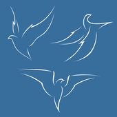 Fényképek madár repülés