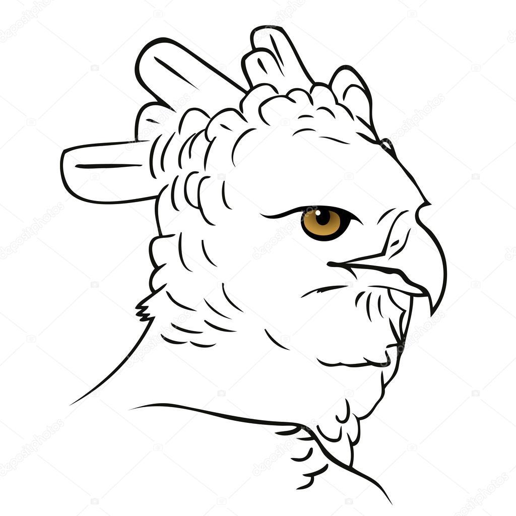 cabeza de águila harpía — Archivo Imágenes Vectoriales © I.Petrovic ...