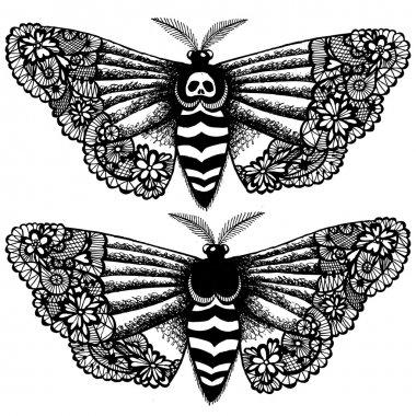 Lacy death's-head moth.