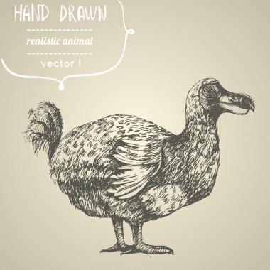 Dodo or Raphus cucullatus.