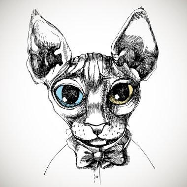 Sfinks cat portrait.