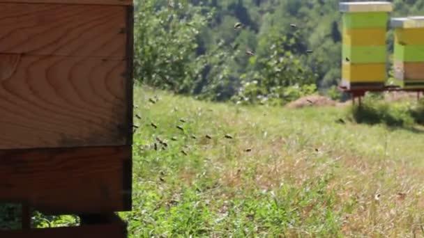 méhek közelében egy méhkas