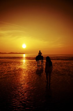 The horse rider on the beach during sunset