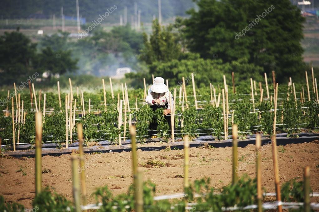 Farmer  in the rural landscape Korea