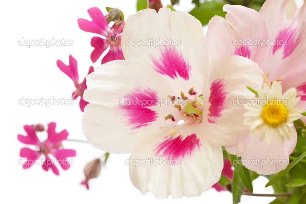 Blumen Seite Rahmen weiß als Hintergrund — Stockfoto © movingmoment ...