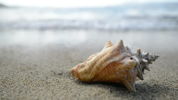 A sea shell on a beach