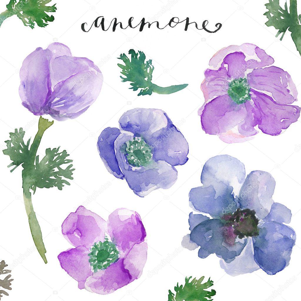 Watercolor anemones watercolor flowers spring flowers for Spring flowers watercolor