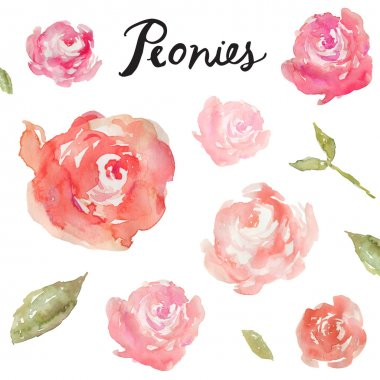 Watercolor Peonies On Isolated White Background