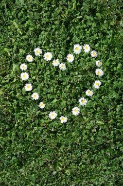 Gaenseblumen Herz