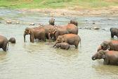 Fotografie Elefantenherde Im Fluss