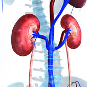 Fotografie ledviny