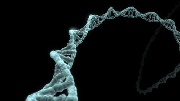 Revolving DNA strand