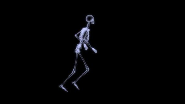 X-Ray radiography of human body (skeleton)