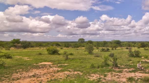 afrikai szavanna idő telik pan