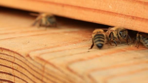 Včely, dovnitř a ven z úlu