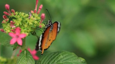 Видео секс с красивой бабочки