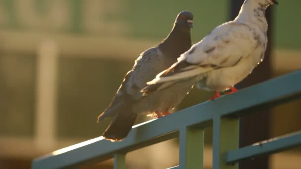 Two pigeons standing on railing in sunlight.