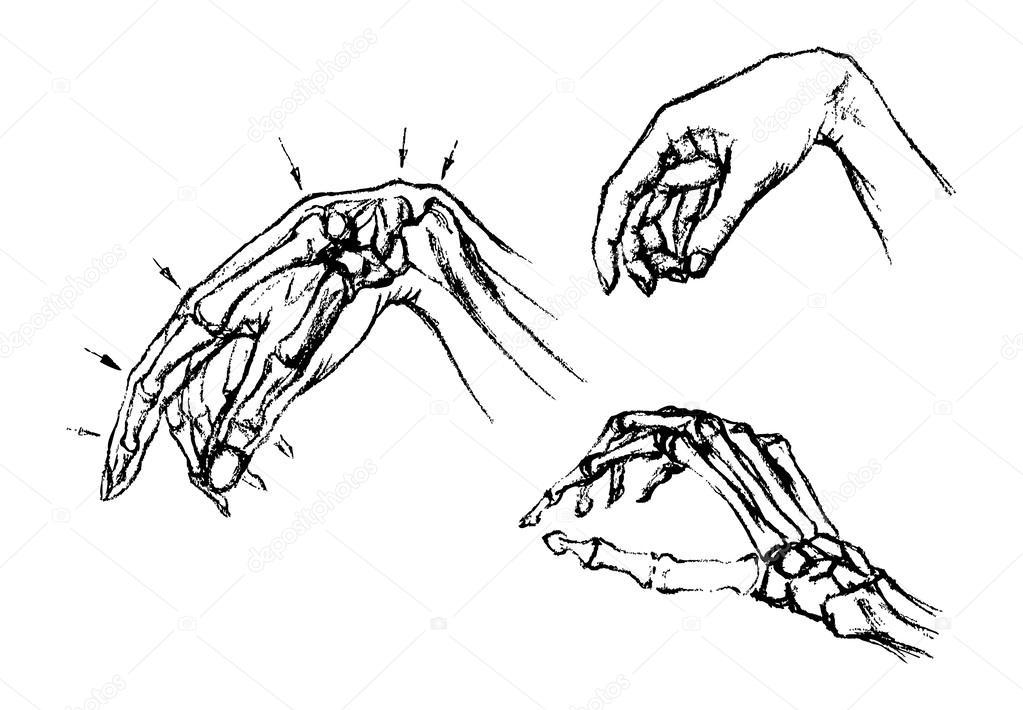 Anatomie des menschlichen Handgelenk — Stockvektor © alekseimakarov ...
