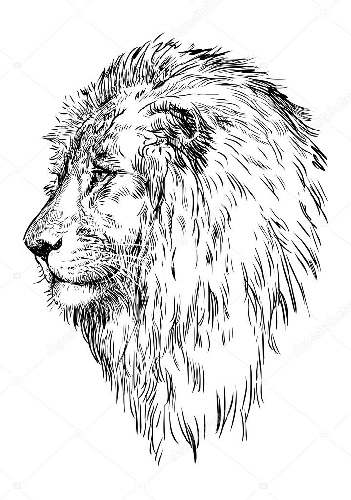 Áˆ Outline Lion Stock Drawings Royalty Free Lion Outline Pictures Download On Depositphotos Frequent special offers and discounts up to 70% off for all products! ᐈ outline lion stock drawings royalty free lion outline pictures download on depositphotos