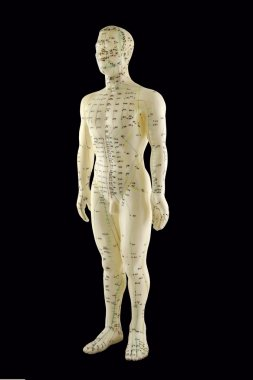 Acupuncture Model - Traditional Chinese Medicine