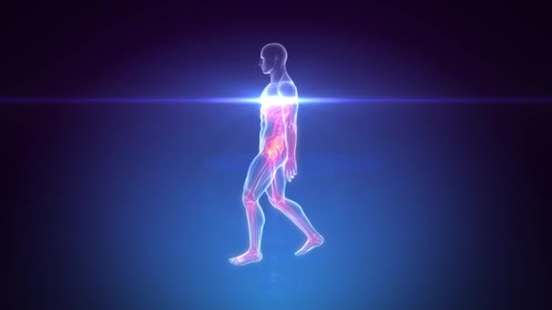 Human Body Skeleton Scan - Animation LOOP