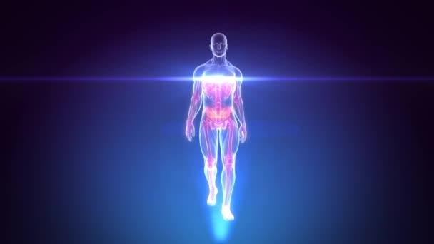 3D rentgenové kontroly lidské anatomie chůze - animace smyčka