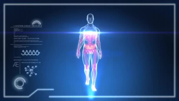 Virtual Human Body walking on a Touch Screen X-Ray Interface - Animation LOOP