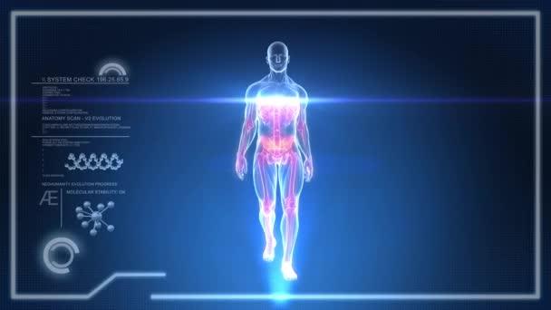 virtuální lidské tělo na dotykové obrazovky x-ray rozhraní - animace smyčka