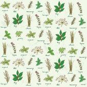čerstvé bylinky pozadí